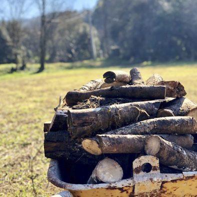 Llenya dels nostres arbres