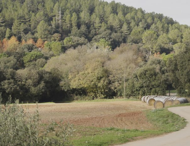 Casa Rural Girona Camins Verds Senderisme Can Gich