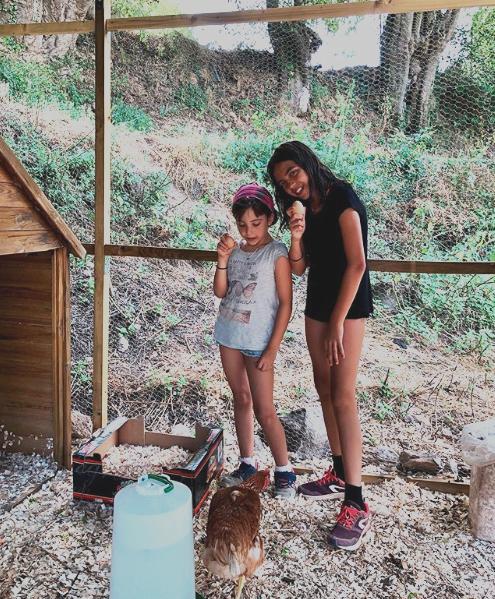 Gallinas Casa Rural Girona Alquilar Can Gich