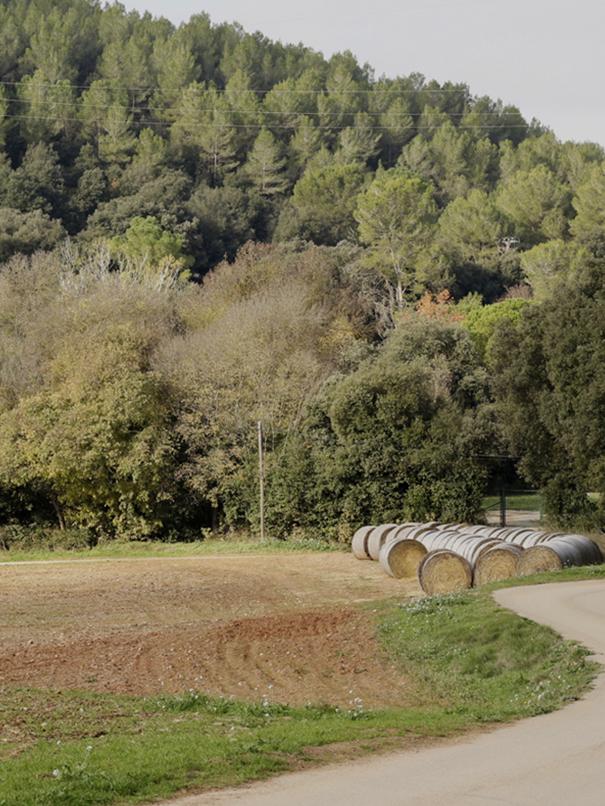 Rutas Verdes Casa Rural Alquilar Girona Can Gich Piscina